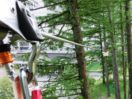20120630tree-to-tree-zip2.JPG