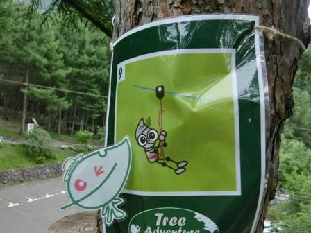 20120723tree4.JPG