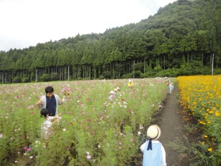 20120925 kosumosu2.JPG