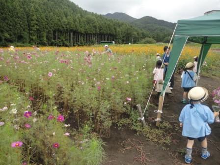 20120925 kosumosu4.JPG
