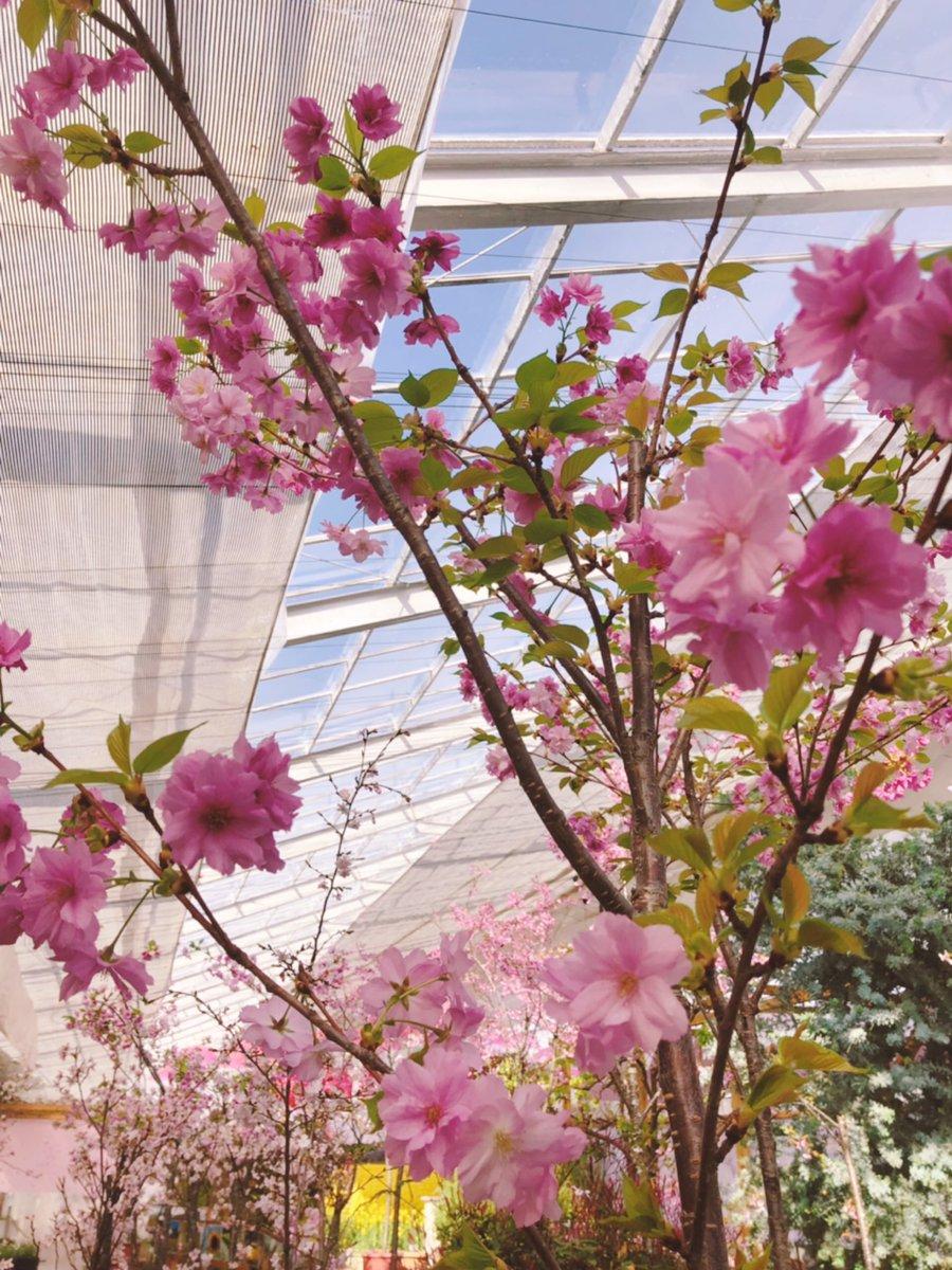 http://www.listel-inawashiro.jp/blog/D1-t-uPUcAAiXzY.jpg