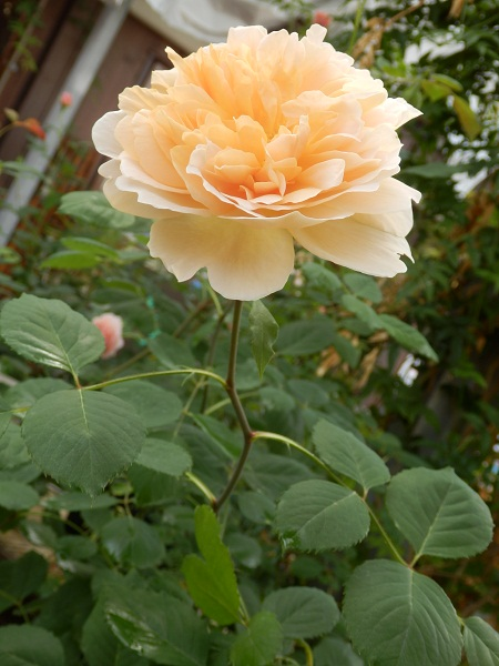 http://www.listel-inawashiro.jp/blog/P5270412.JPG
