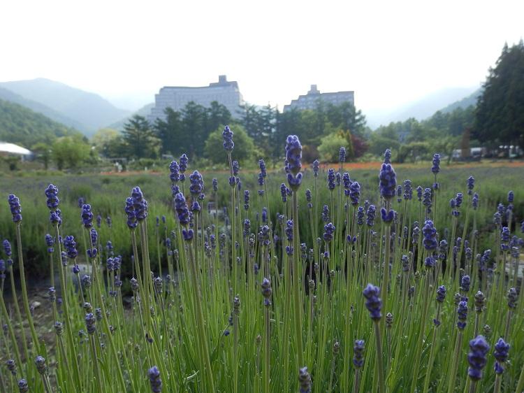 http://www.listel-inawashiro.jp/blog/P6160012.JPG