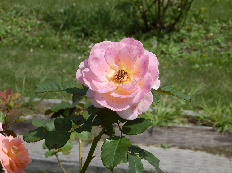 http://www.listel-inawashiro.jp/blog/P9131387.JPG