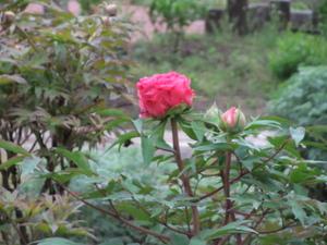2010_05280011.JPG