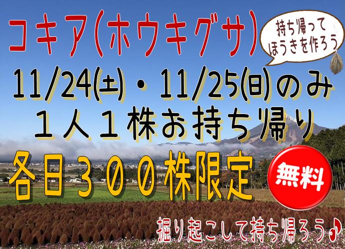 http://www.listel-inawashiro.jp/blog/kokia.png